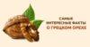 грецкий орех для организма