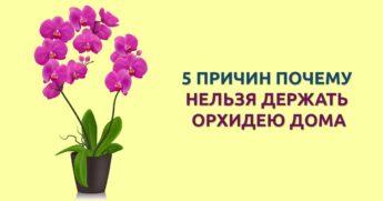 держать орхидею дома нельзя