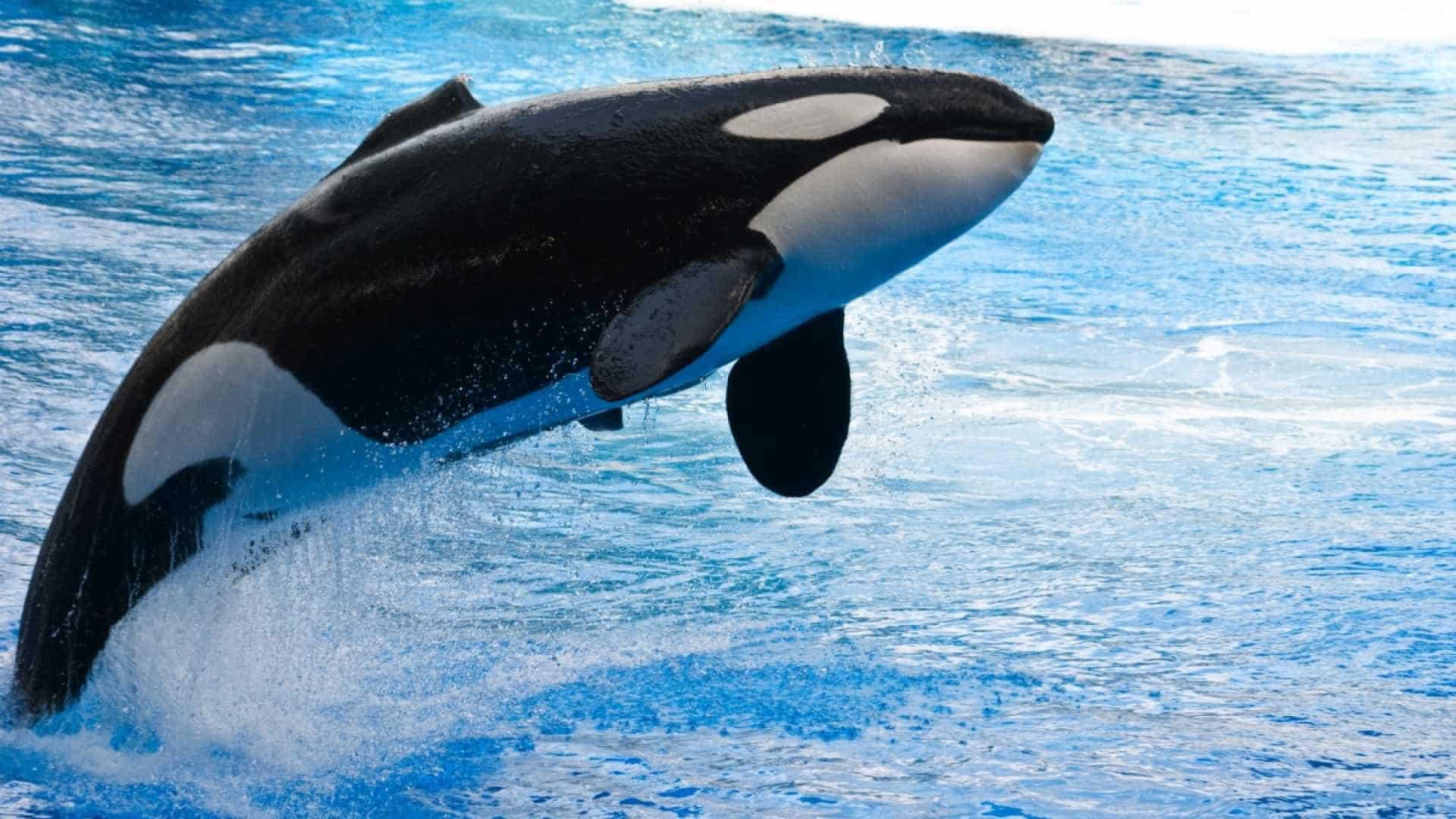 факты о китах